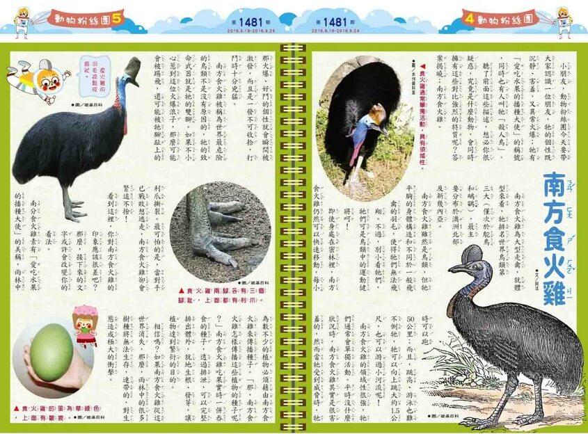 南方食火雞 愛吃水果的播種大使殺人鳥澳洲動物