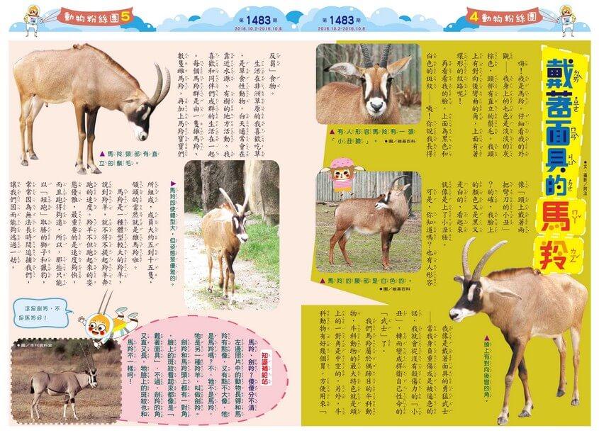 戴著面具的馬羚偶蹄目牛科非洲動物