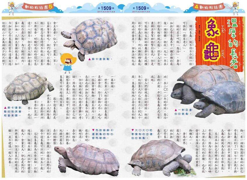 溫厚的長者 象龜