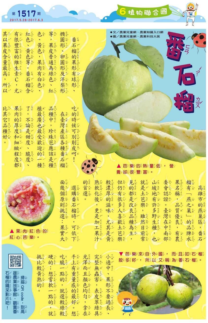 番石榴  - kid story book weekly1517 06 - 全國兒童週刊1517期出刊囉!