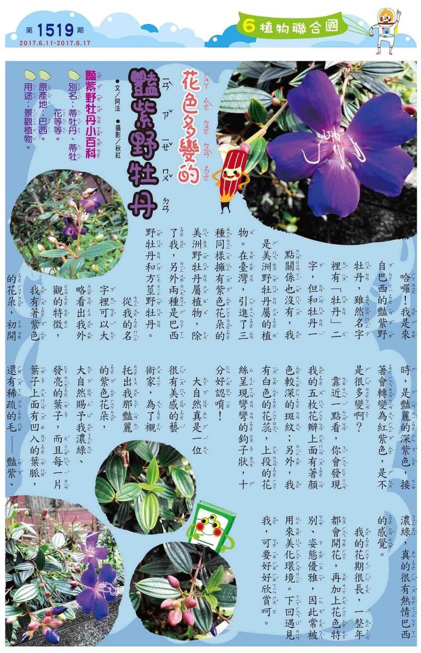 6 植物聯合國 花色多變的豔紫野牡丹