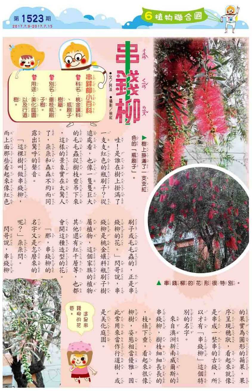 6 植物聯合國 串錢柳  - kid story book weekly1523 06 - 全國兒童週刊1523期出刊囉!