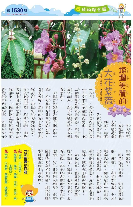 06 植物聯合國 燦爛美麗的大花紫薇