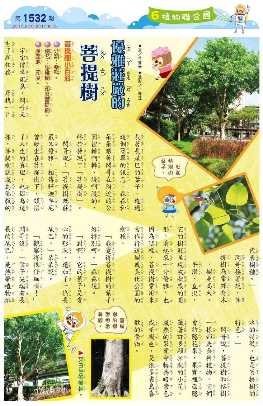 06 植物聯合國 優雅莊嚴的菩提樹