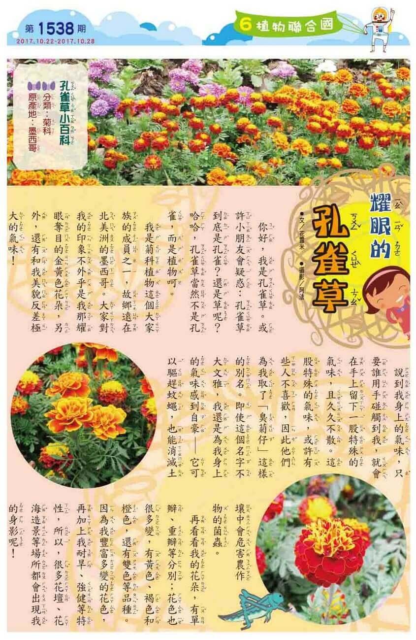 06 植物聯合國 耀眼的孔雀草