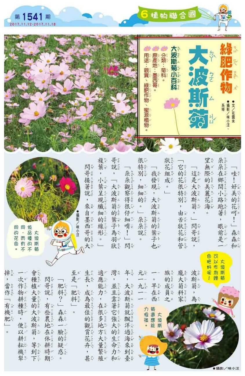 06 植物聯合國 綠肥作物 大波斯菊