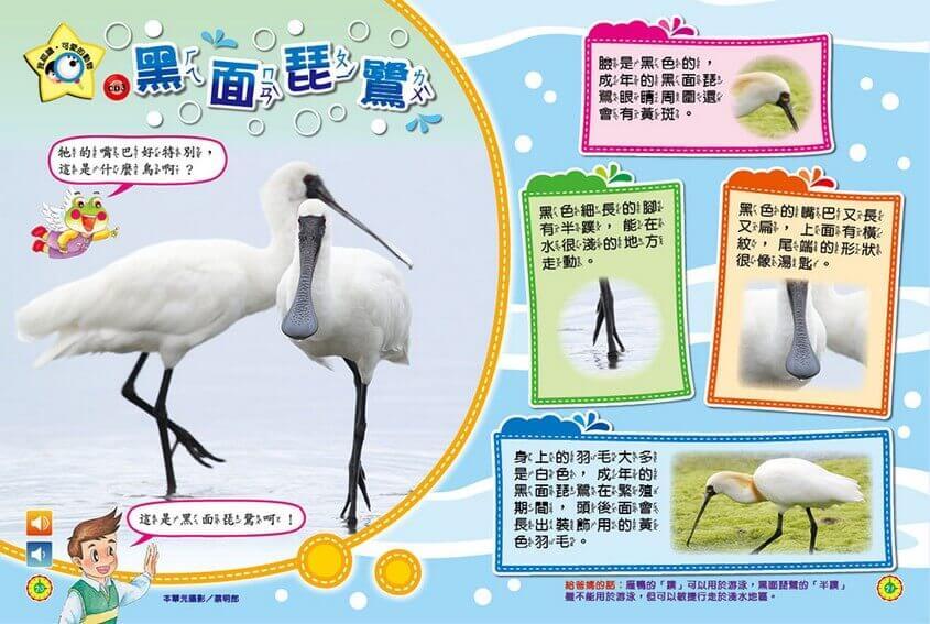 我認識‧可愛的動物-黑面琵鷺