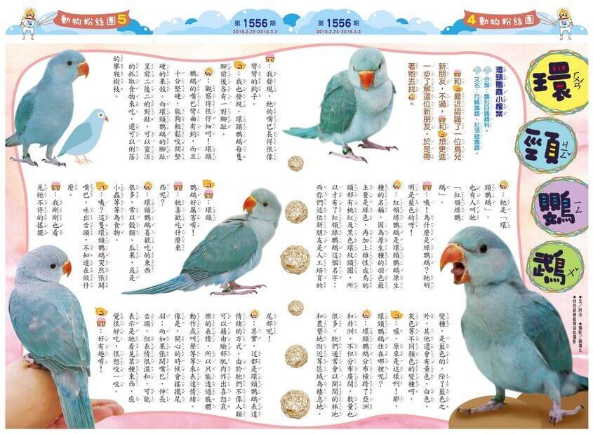 04-05 動物粉絲團 環頸鸚鵡