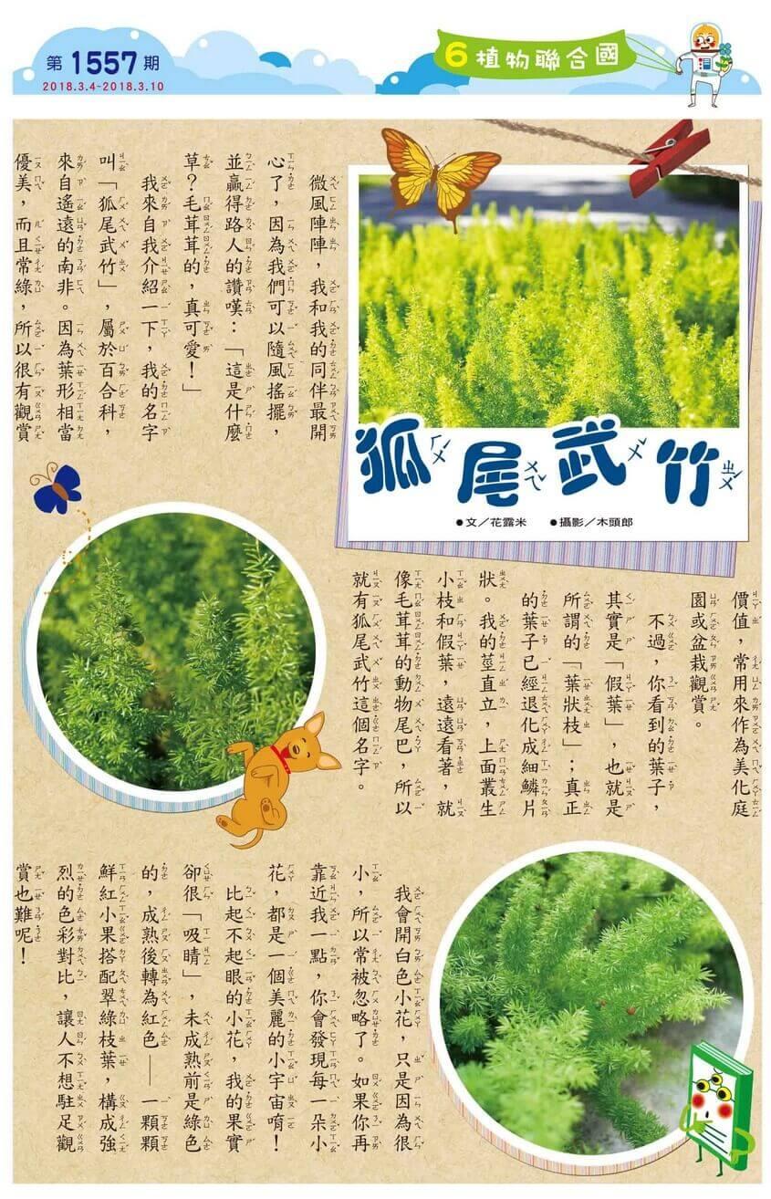06 植物聯合國 狐尾武竹