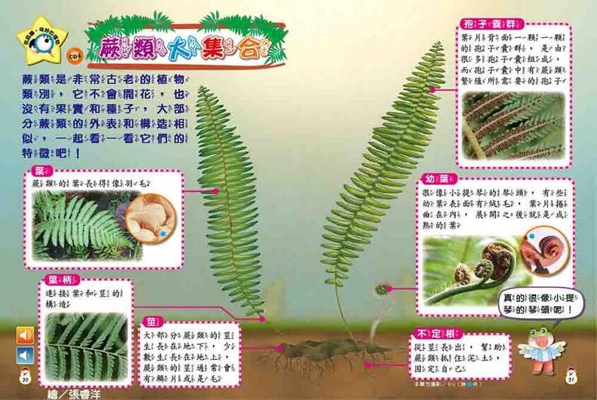 我認識‧奇妙的植物-蕨類大集合