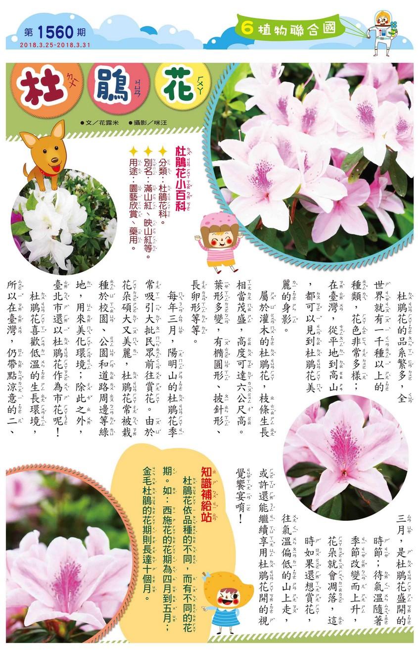 06 植物聯合國 杜鵑花