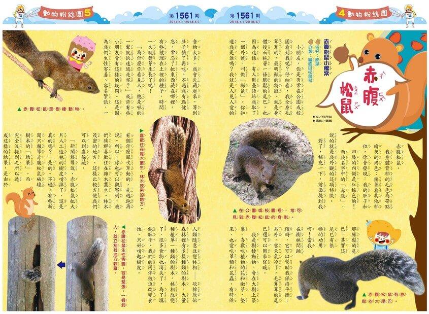 04-05 動物粉絲團 赤腹松鼠