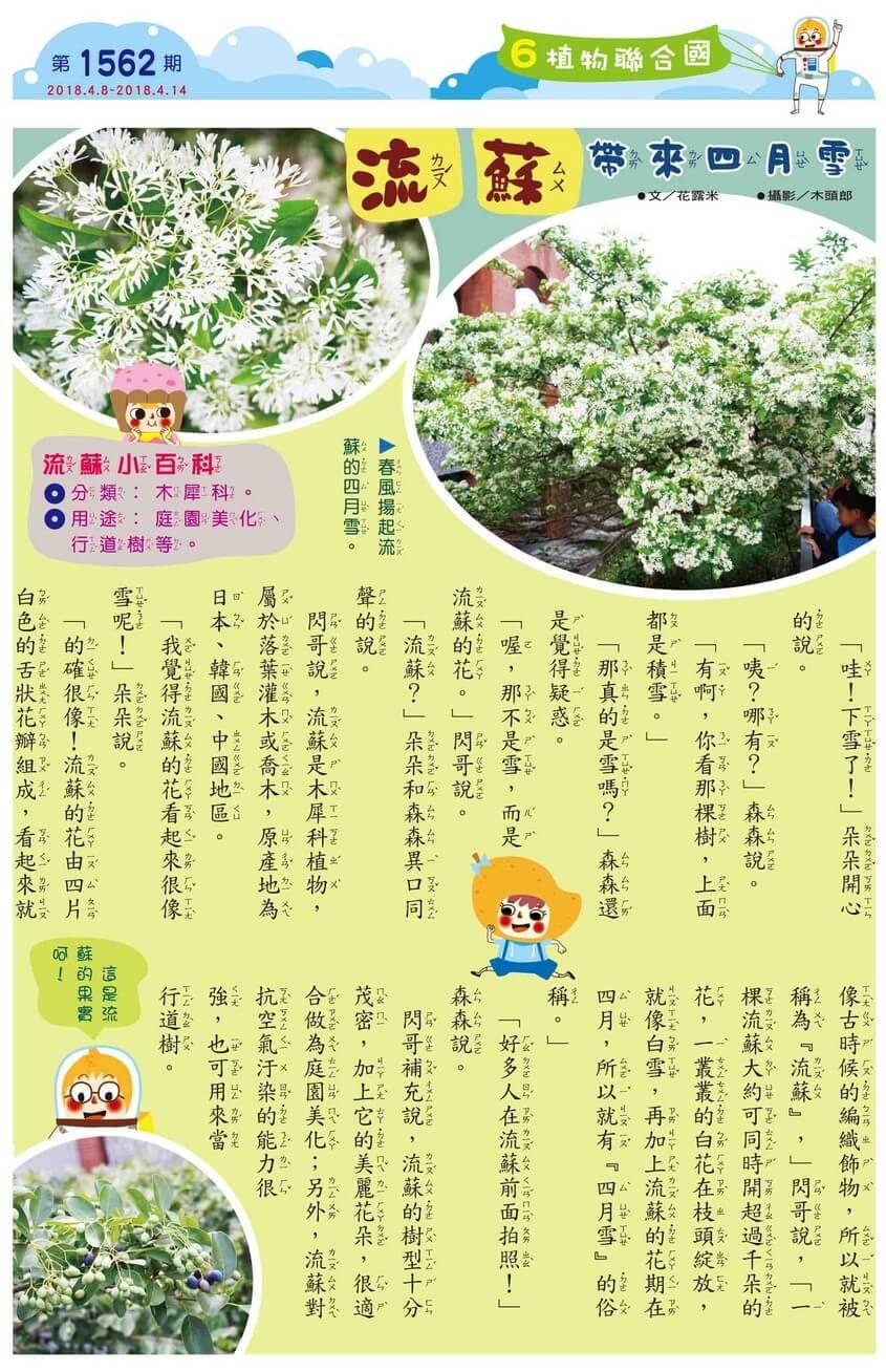 06 植物聯合國 流蘇帶來四月雪