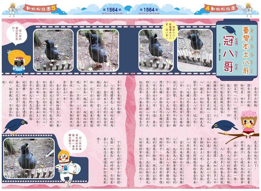 04-05 動物粉絲團 臺灣本土八哥 冠八哥