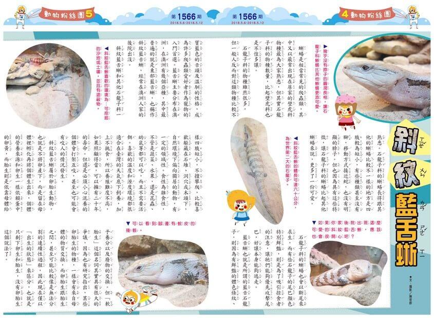 04-05 動物粉絲團 斜紋藍舌蜥