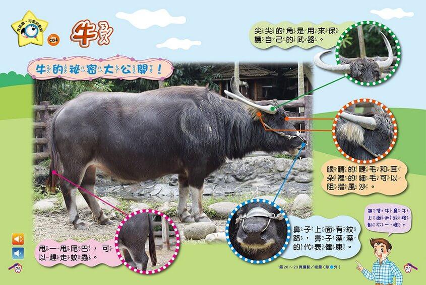 我認識‧可愛的動物-牛