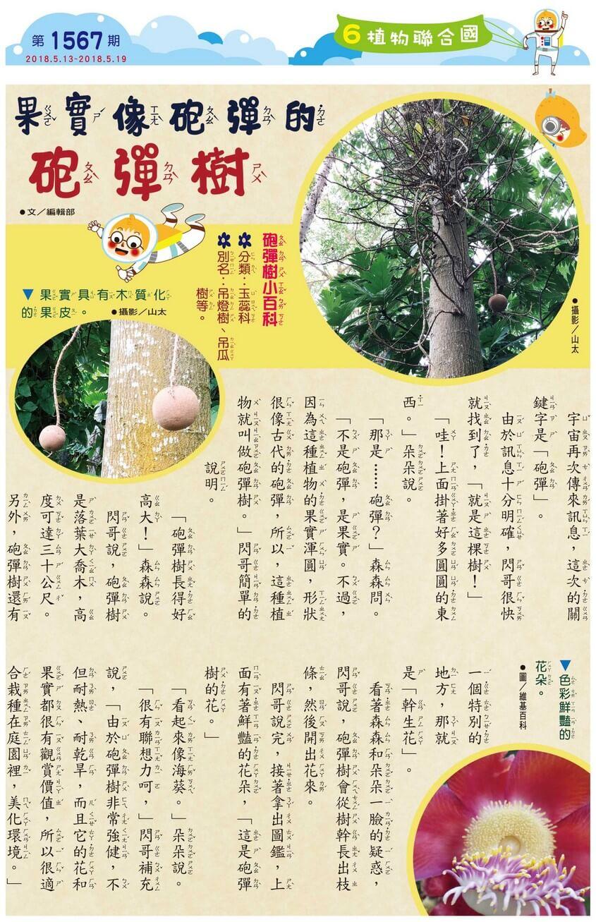 06 植物聯合國 果實像砲彈的砲彈樹