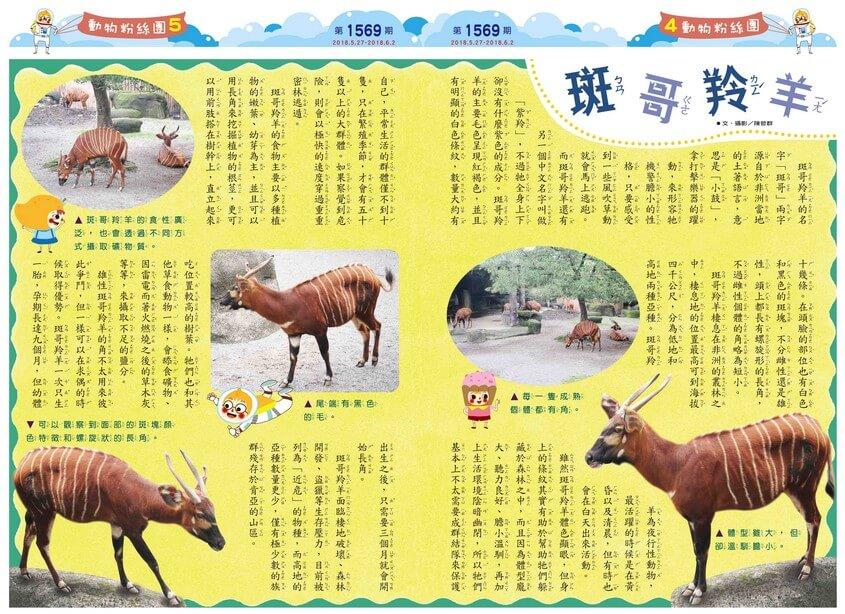 04-05 動物粉絲團 斑哥羚羊