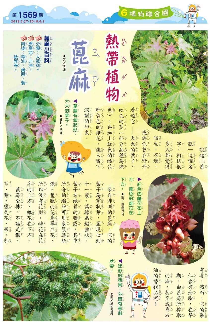 06 植物聯合國 熱帶植物 蓖麻
