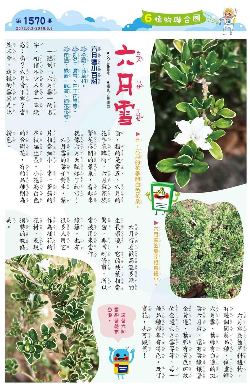 06 植物聯合國 六月雪