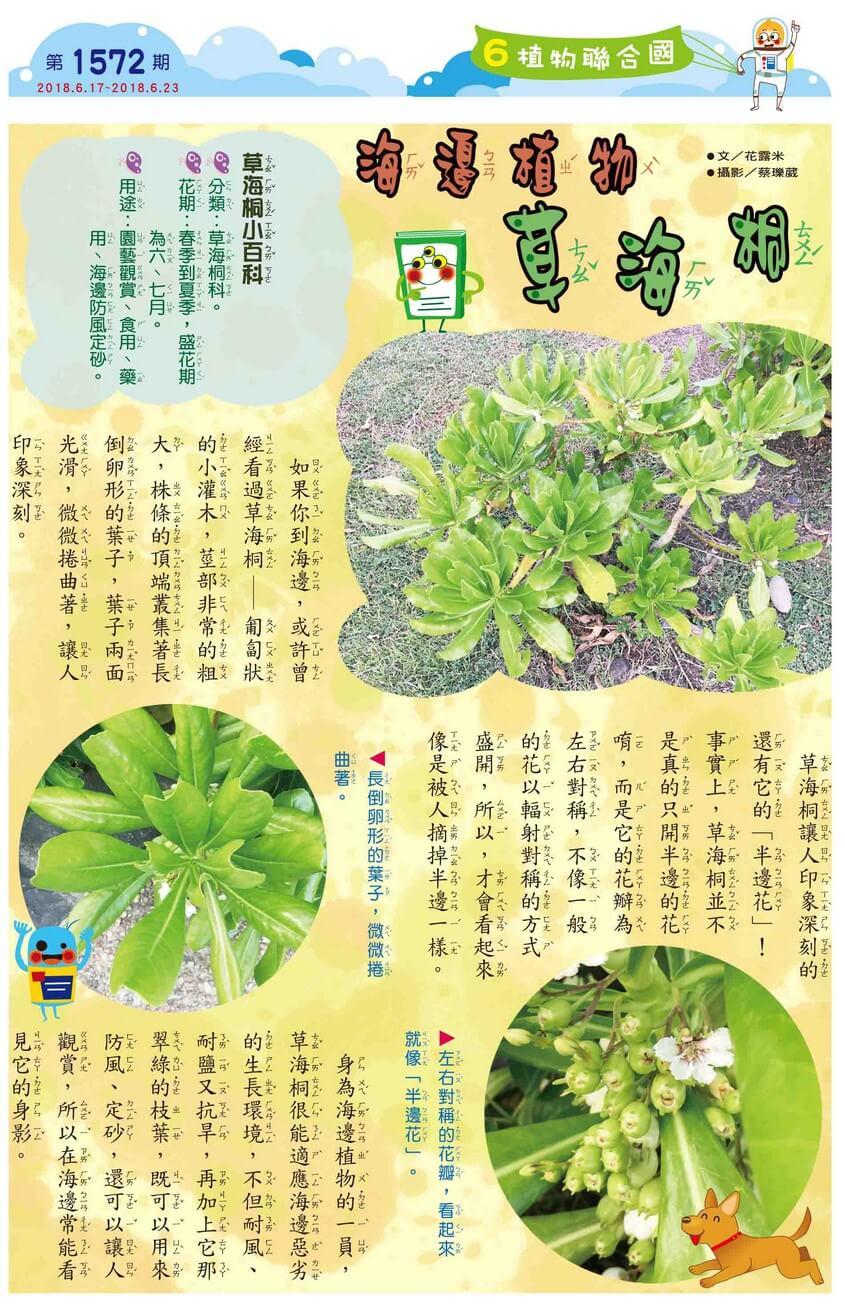 06 植物聯合國 海邊植物 草海桐