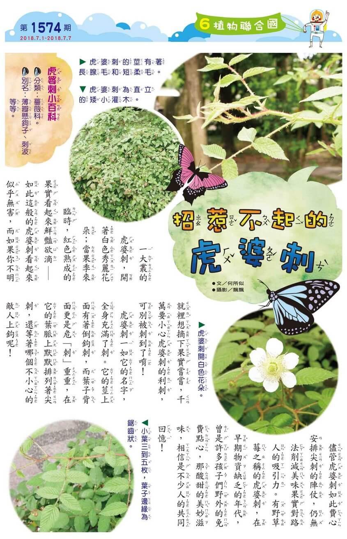 06 植物聯合國 招惹不起的虎婆刺