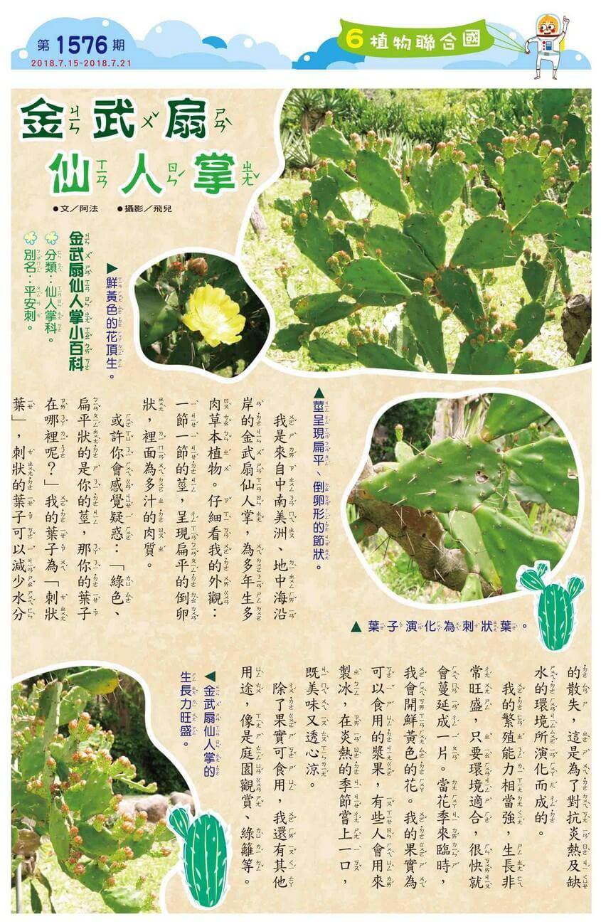 06 植物聯合國 金武扇仙人掌