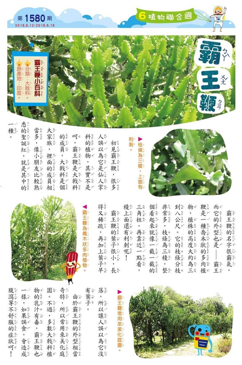06 植物聯合國 霸王鞭