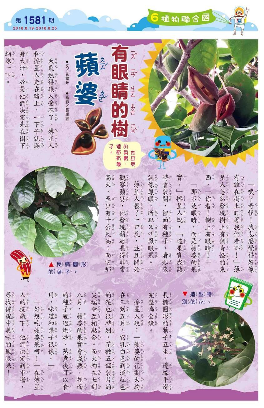 06 植物聯合國 有眼睛的樹 蘋婆