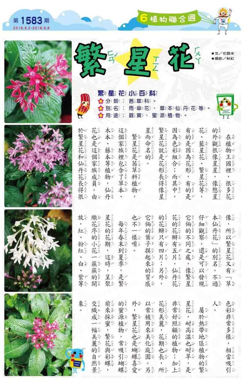 06 植物聯合國 繁星花