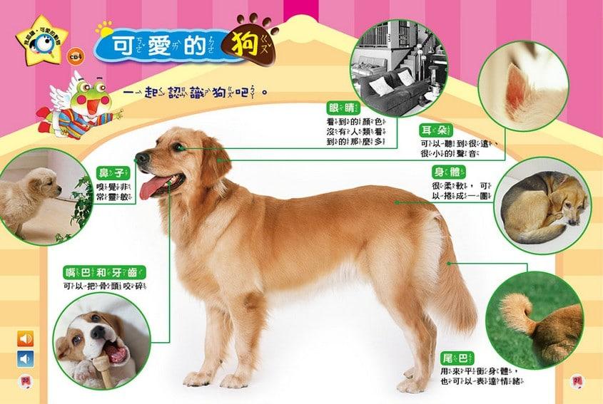 我認識‧可愛的動物-可愛的狗