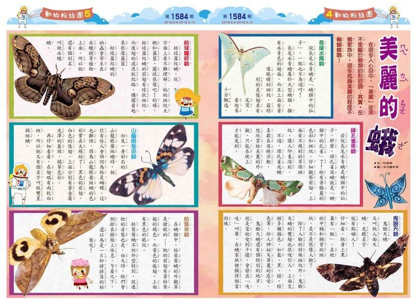 04-05 動物粉絲團 美麗的蛾