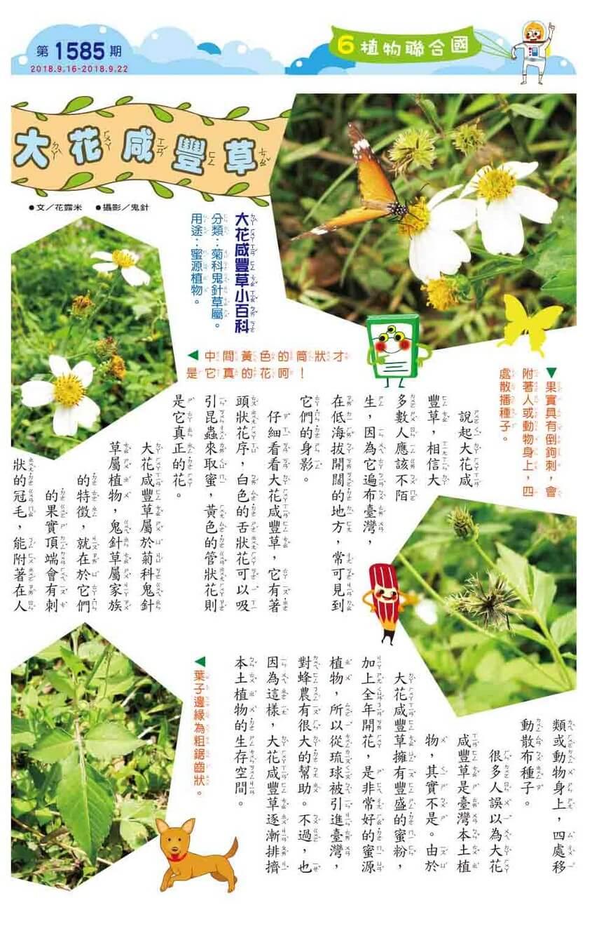 06 植物聯合國 大花咸豐草