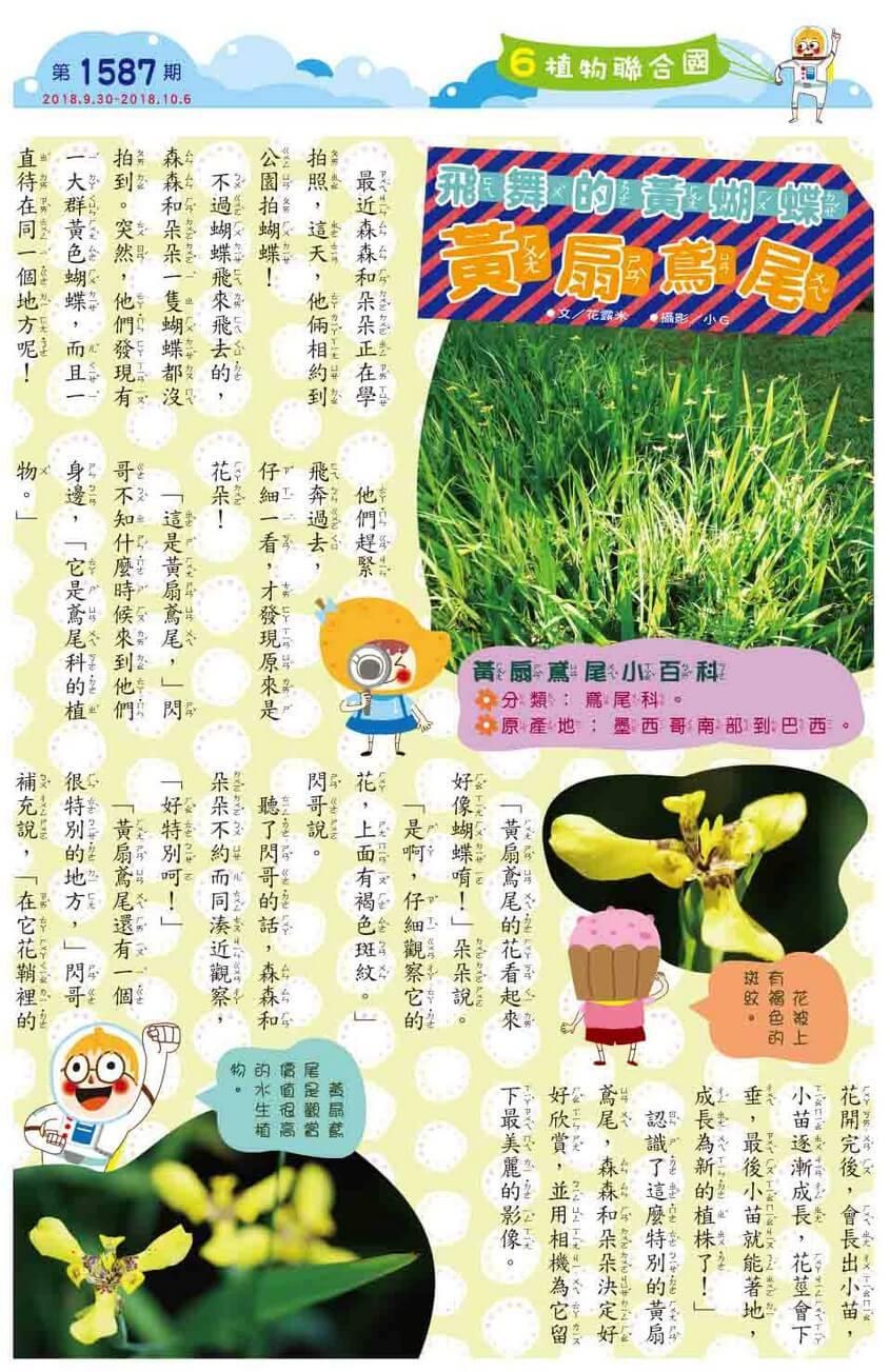 06 植物聯合國 飛舞的黃蝴蝶 黃扇鳶尾