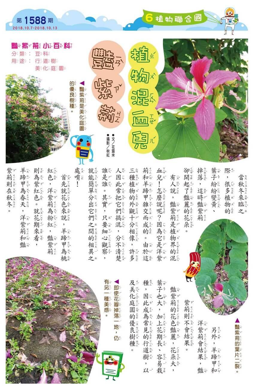 06 植物聯合國 植物混血兒 豔紫荊