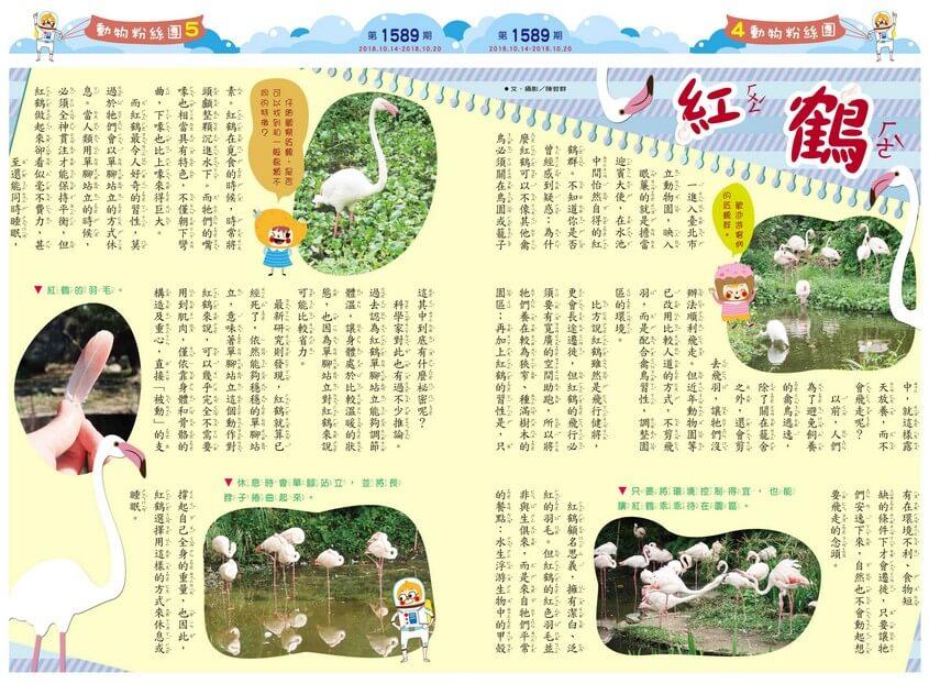 04-05 動物粉絲團 紅鶴