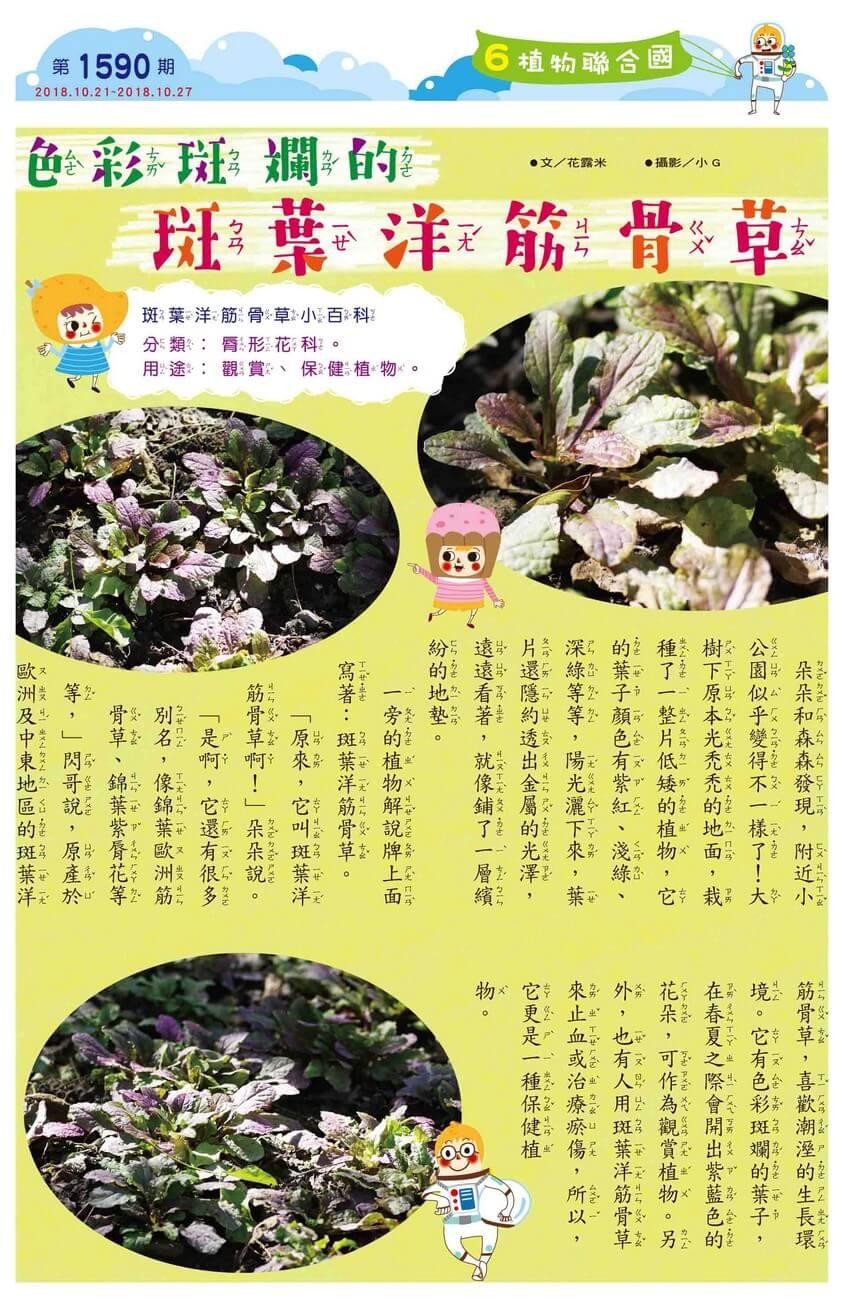 06 植物聯合國 色彩斑斕的斑葉洋筋骨草