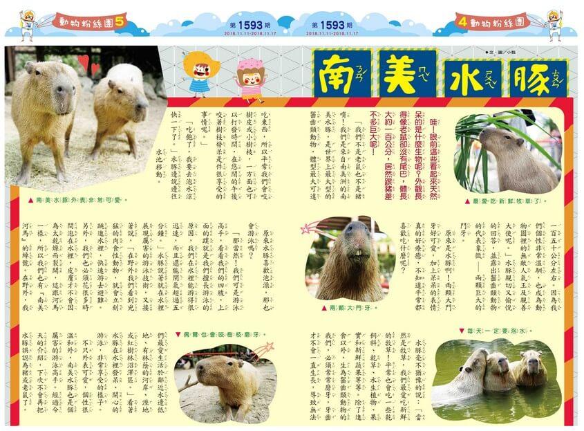 04-05 動物粉絲團 南美水豚