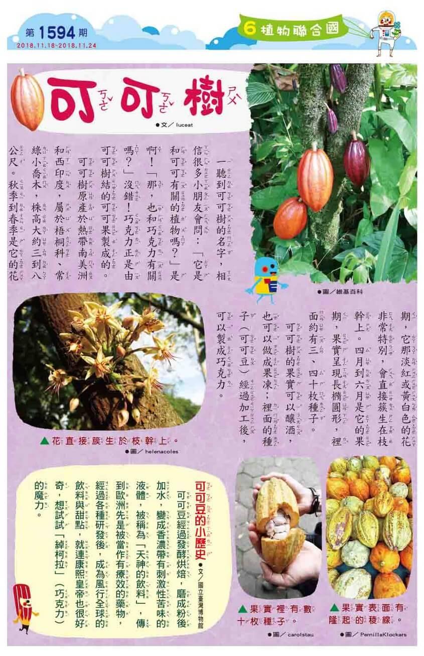 06 植物聯合國 可可樹