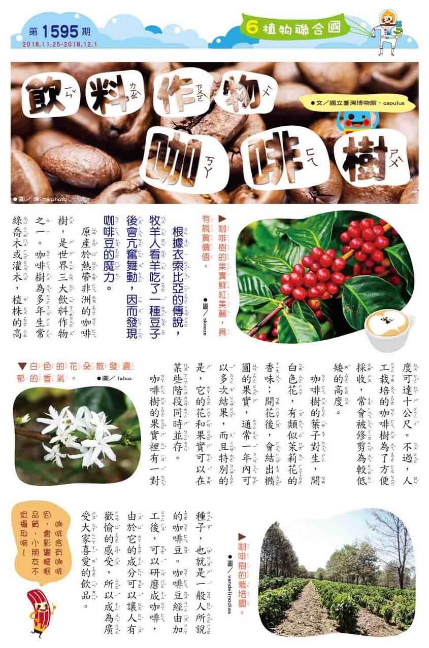 06 植物聯合國 飲料作物 咖啡樹