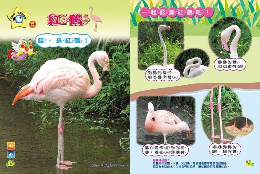 我認識‧可愛的動物-紅鶴