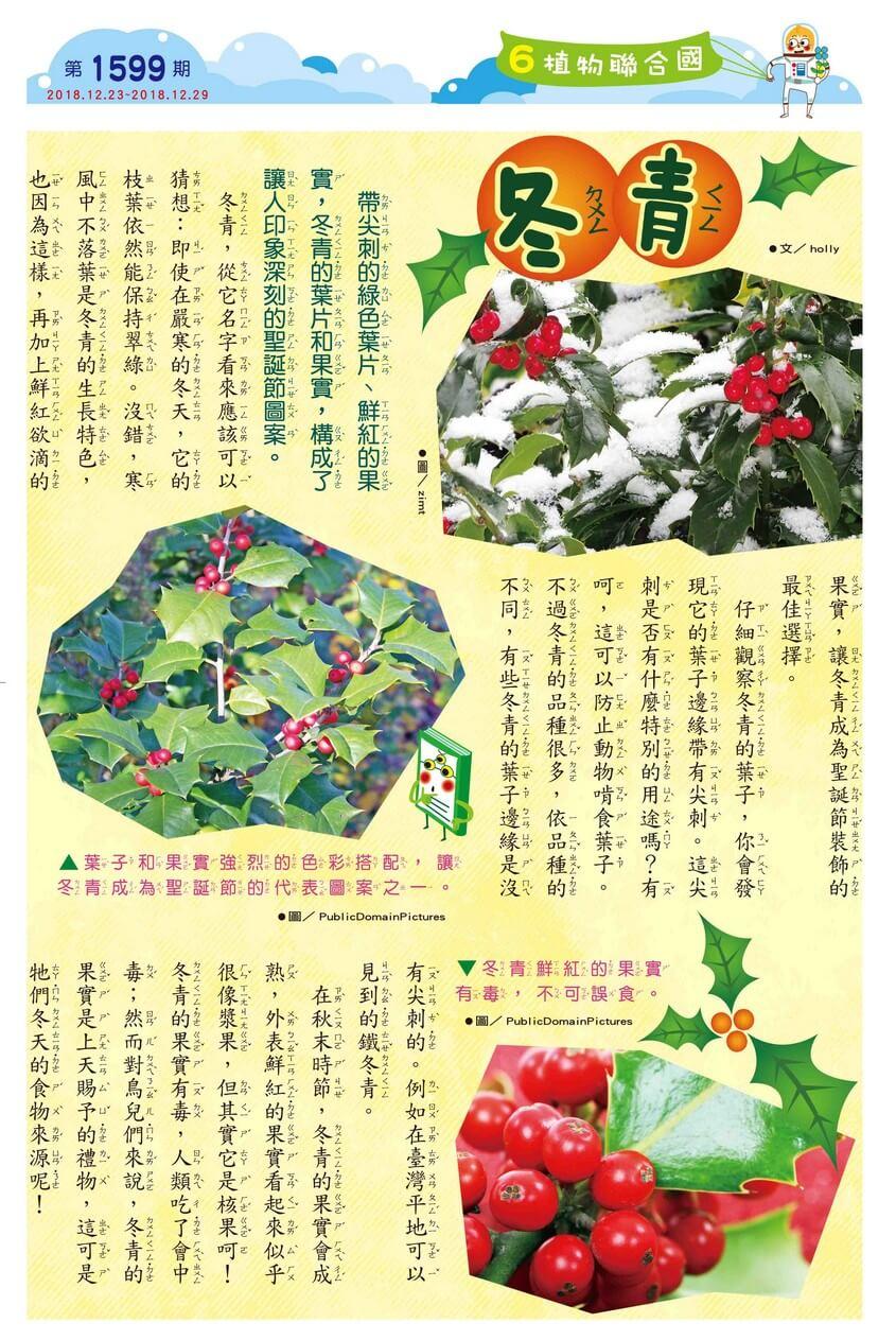 06 植物聯合國 冬青
