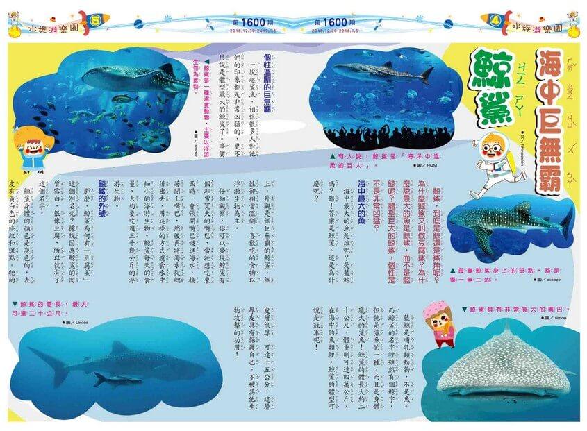 04-05 水族游樂園 海中巨無霸 鯨鯊