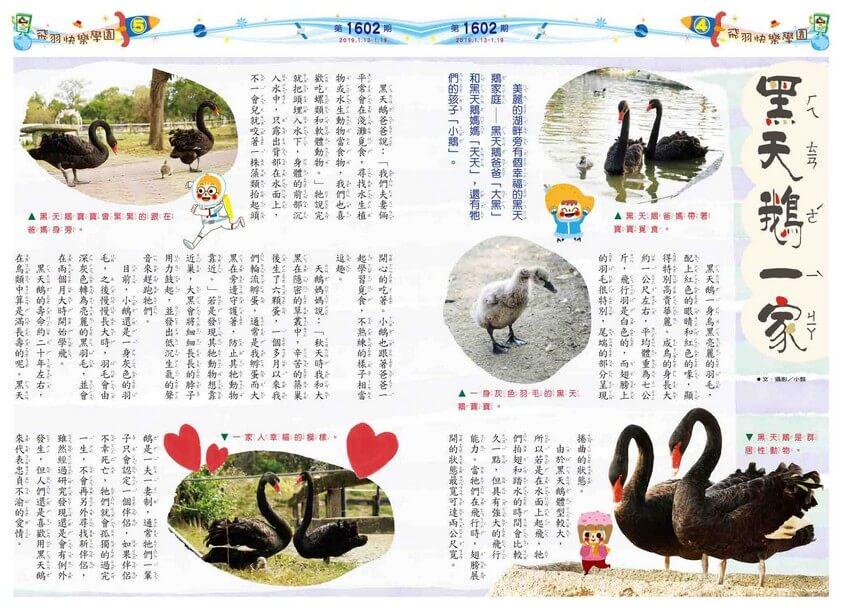 04-05 飛羽快樂學園 黑天鵝一家