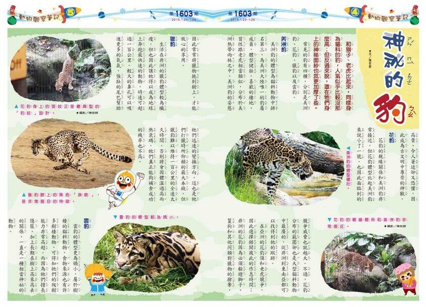 04-05 動物觀察筆記 神祕的豹
