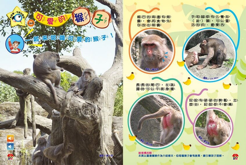 我認識‧可愛的動物-可愛的猴子