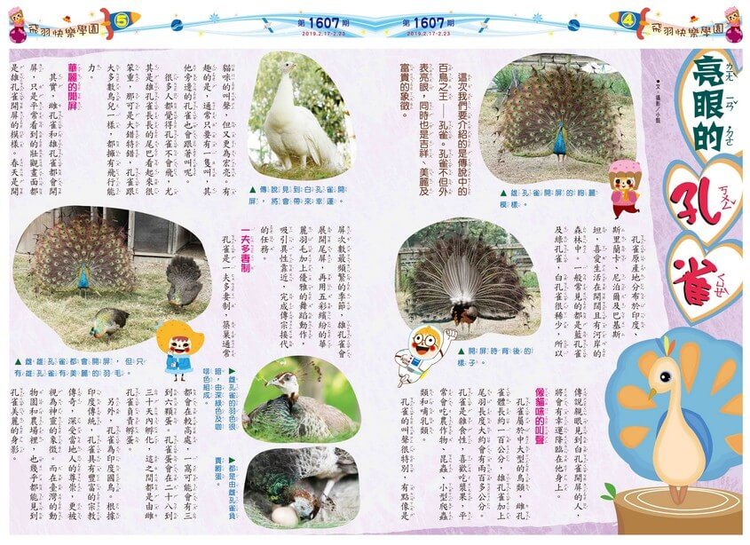 04-05 飛羽快樂學園 亮眼的孔雀