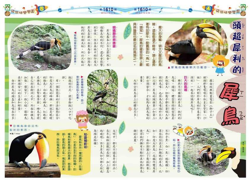 04-05 飛羽快樂學園 頭超犀利的犀鳥