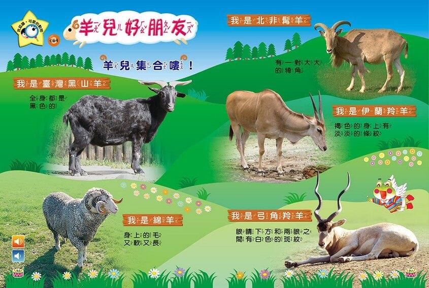 我認識‧可愛的動物-羊兒好朋友