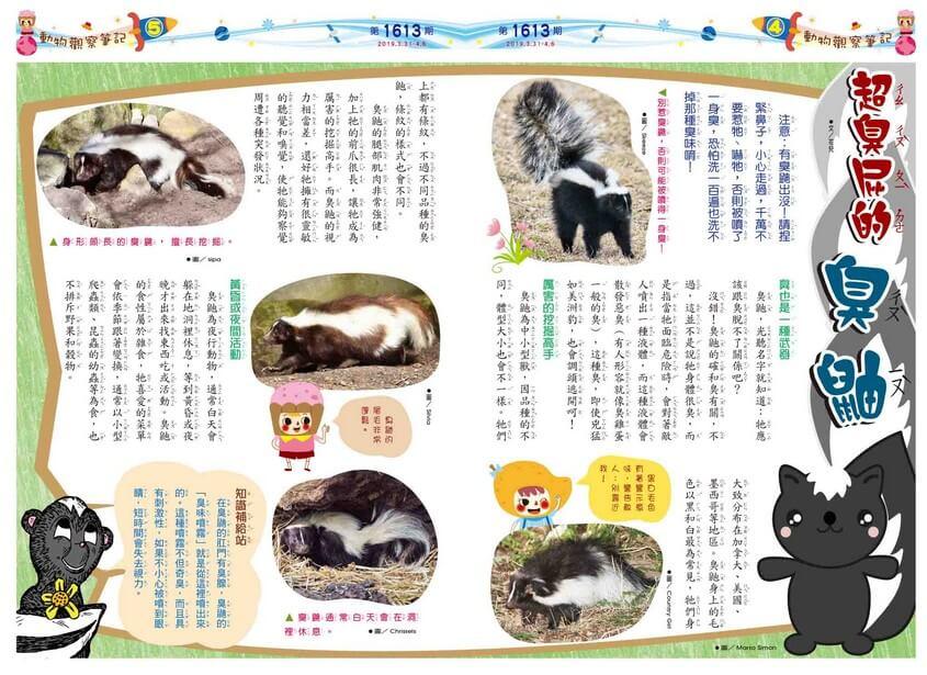 04-05 動物觀察筆記 超臭屁的臭鼬